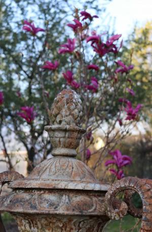 magnolia-amphore-8feda2671dbda4d13813e39ad503eef3